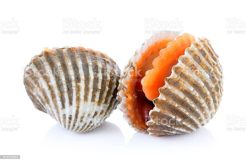 cockles pescados y mariscos fresco sobre fondo blanco - foto de stock