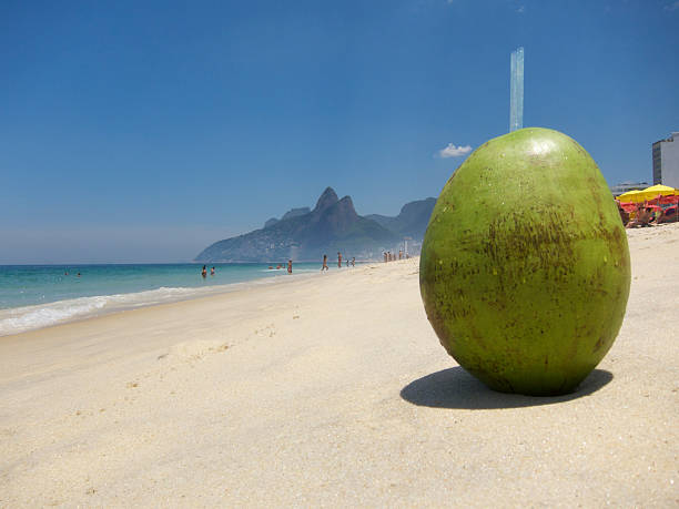 "Fresh Coco Gelado Drinking Coconut Ipanema Beach Rio de Janeiro Fresh green coconut with drinking straws (aka ""Coco Gelado"") sits on on Ipanema Beach on bright summer day gelado stock pictures, royalty-free photos & images"