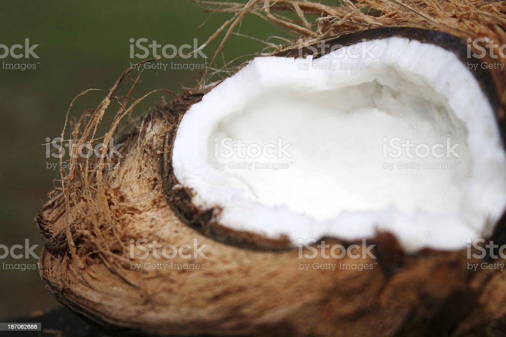 Fresh Coconut Detail royalty-free stock photo