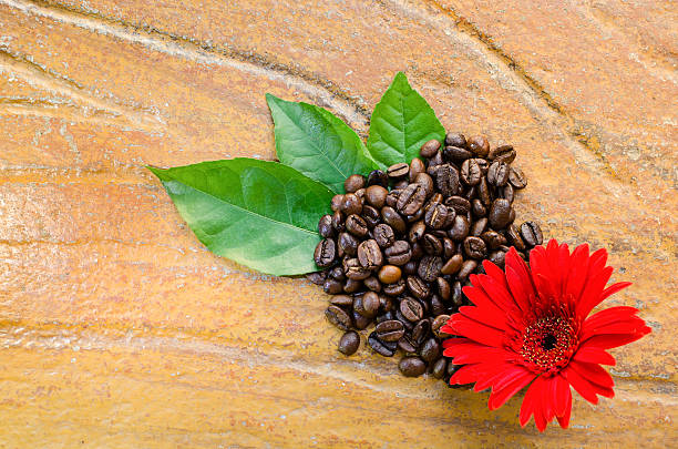 Fresh coffee beans with flower and leaves stock photo
