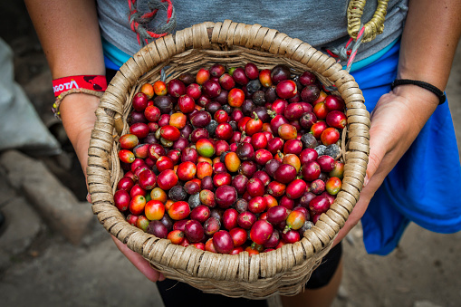 istock Fresh coffee on a basket 700180516