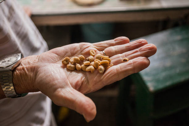 Fresh coffee seeds beans in hand of a farmer stock photo