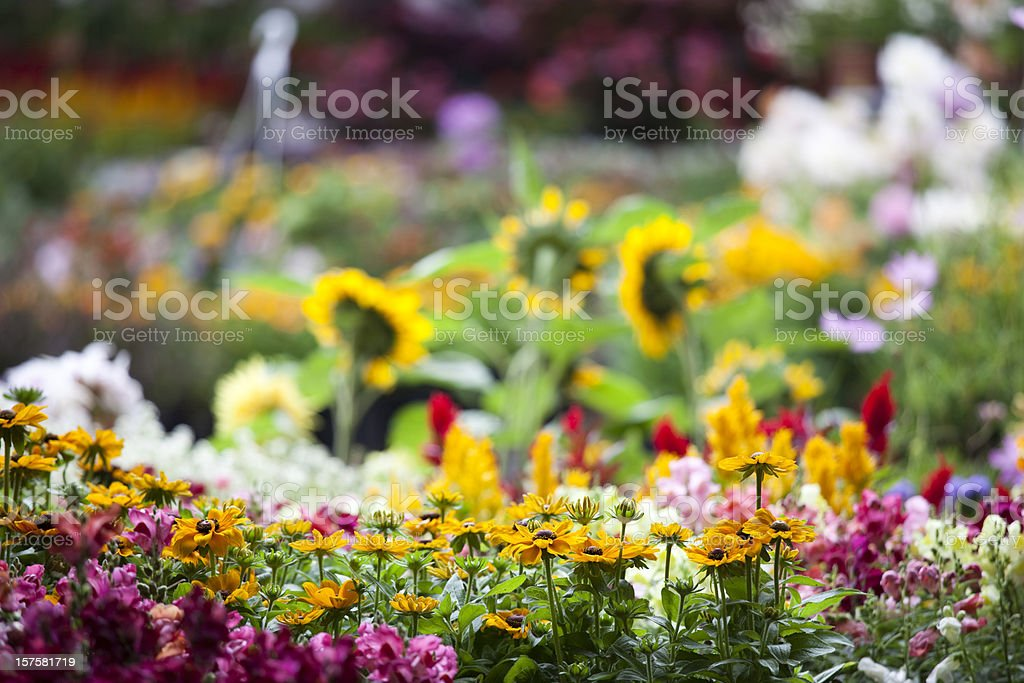 Fresh colorful spring flowers in garden center plant nursery stock photo