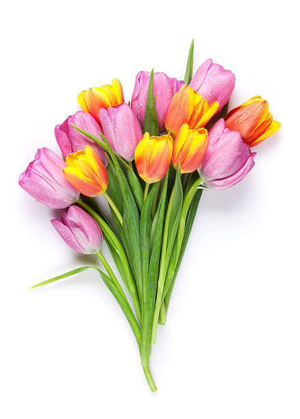 Fresh colorful tulip flowers bouquet stock photo