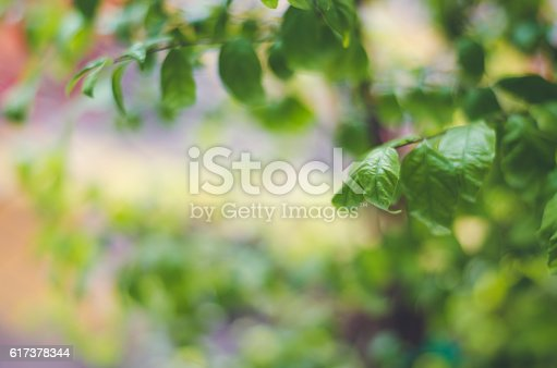 Fresh condition and blur green leaves on green background: Cinematic tone