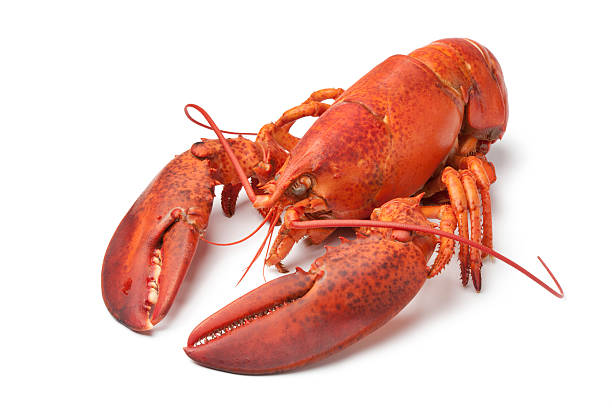 Fresh cooked lobster stock photo