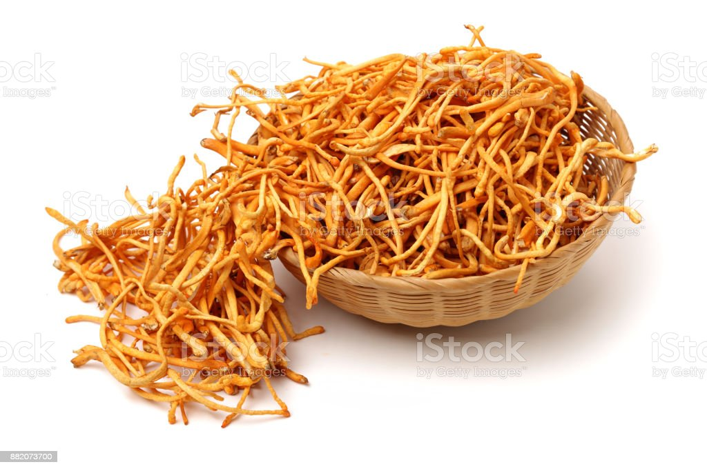 Fresh Cordyceps mushroom on white background stock photo