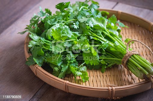 Fresh coriander, cilantro leaves on  basket