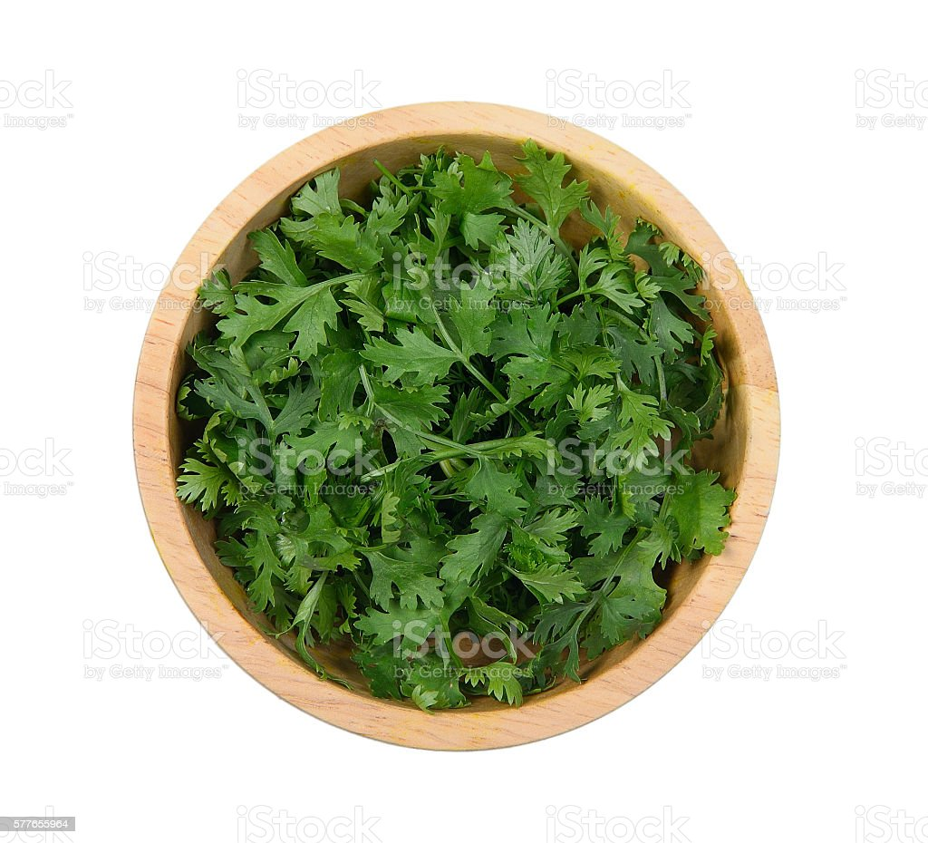 fresh coriander leaves in wooden bowl on white backg stock photo