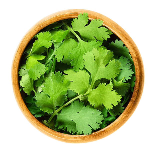Fresh coriander or cilantro leaves in a wooden bowl Fresh coriander leaves, also known as cilantro, Chinese parsley and dhania, in a wooden bowl on white background. Green Coriandrum sativum. Edible herb. Isolated macro food photo close up from above. cilantro stock pictures, royalty-free photos & images