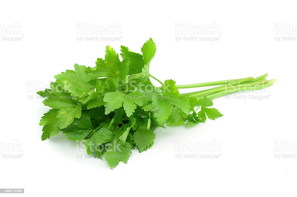 Fresh coriander sprigs on white background stock photo