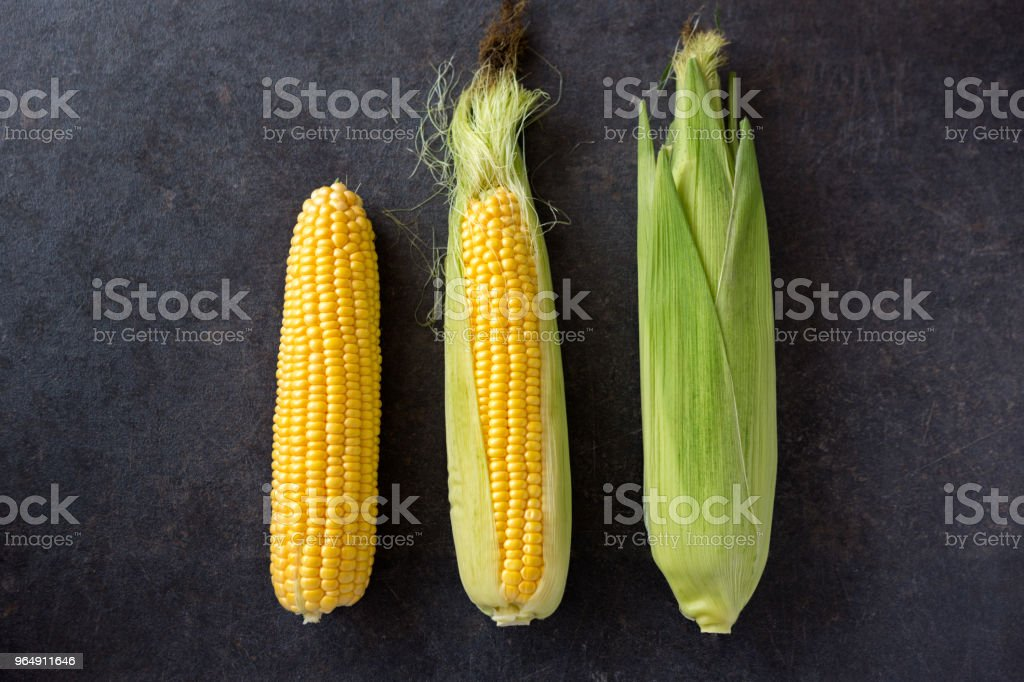 Fresh corn, Fresh corn on cobs on table closeup royalty-free stock photo