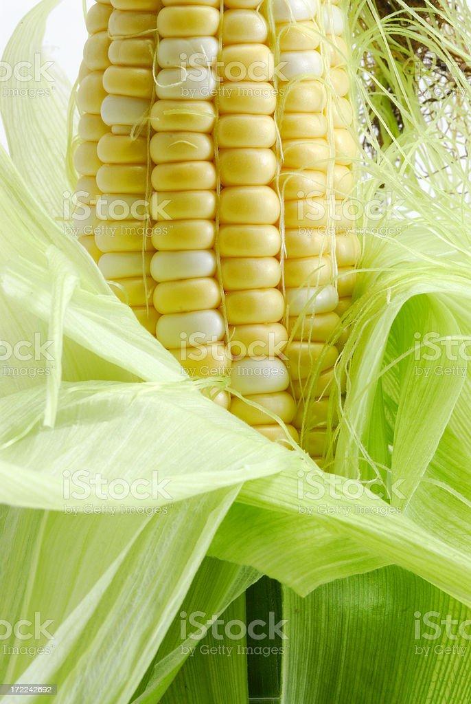 Fresh corn on the cob close up. royalty-free stock photo