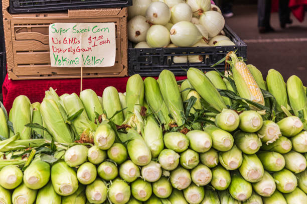 Fresh corn on the cob for sale at a farmers market stock photo