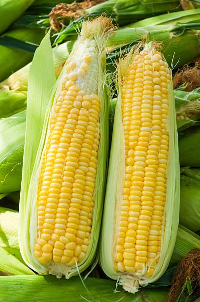 Frischer Mais – Foto