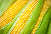 istock Fresh corn 184331667