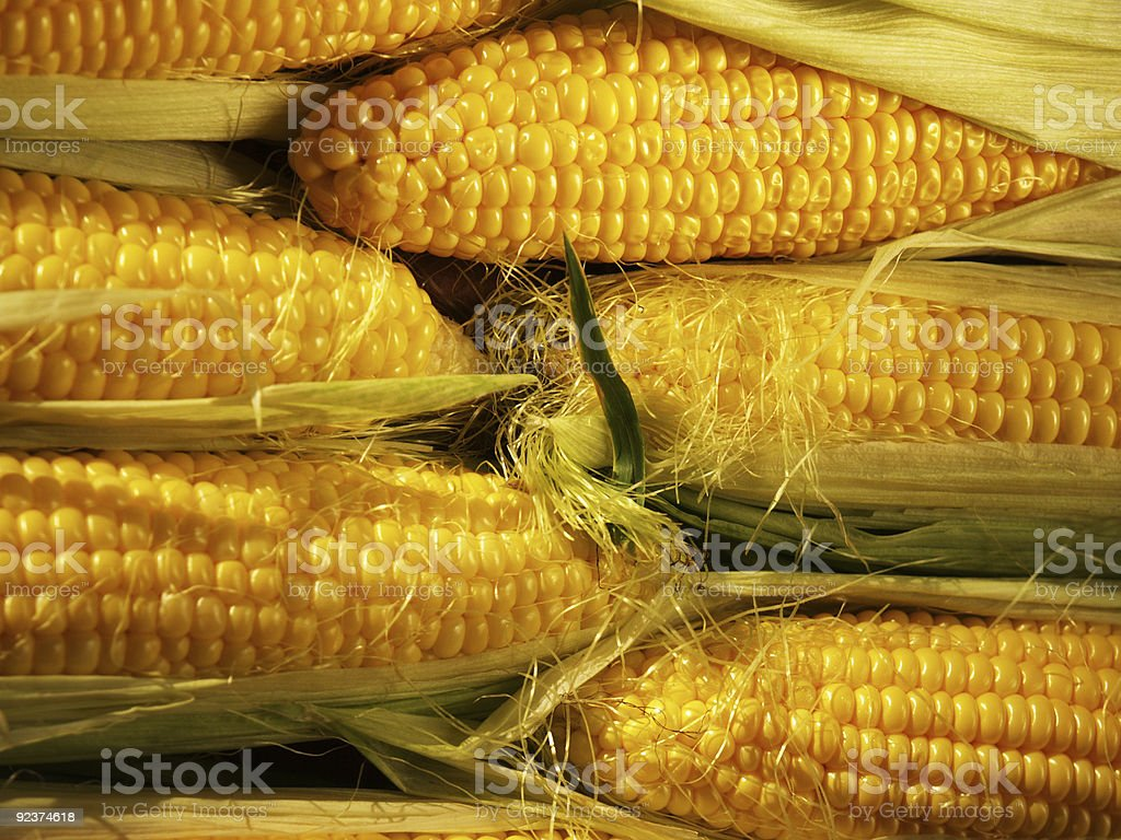 Fresh corn royalty-free stock photo