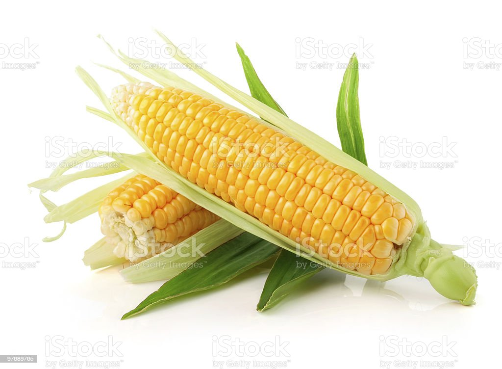 fresh corn vegetable with green leaves stock photo