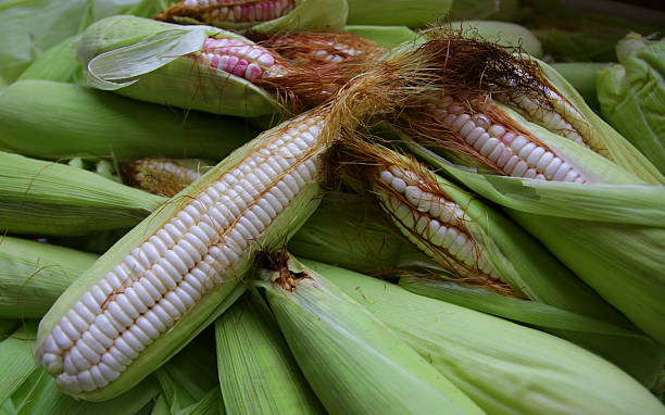 Fresh corn with green leaves stock photo
