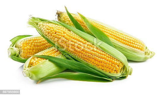 Fresh corn with green leaves still life vegetables. Isolated on white background
