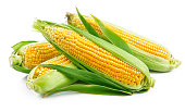 Fresh corn with green leaves still life vegetables