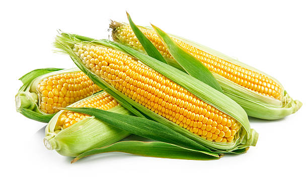 Fresh corn with green leaves still life vegetables stock photo