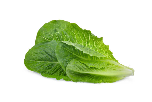 fresh cos lettuce leaf isolated on white background - lettuce stock photos and pictures