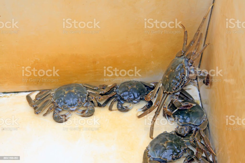 fresh crab on white background, is a very delicious food royalty-free stock photo