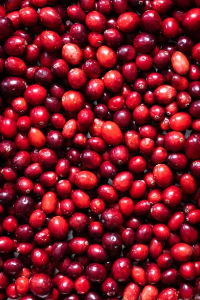 Fresh Cranberries Full Frame stock photo