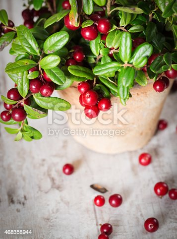 Fresh Cranberries In A Pot Stock Photo & More Pictures of 2015