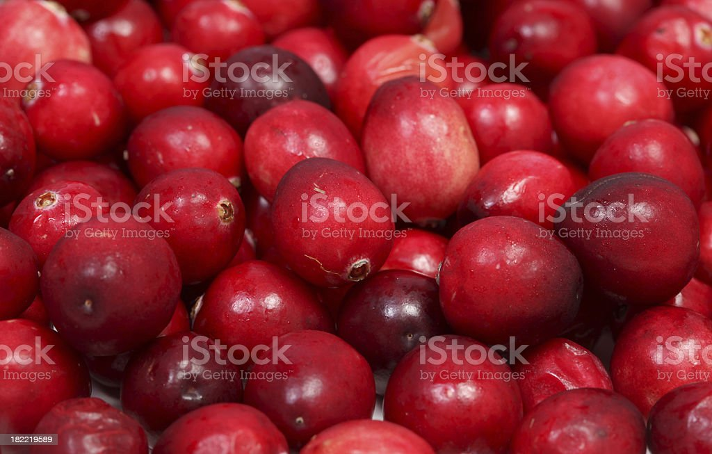 Fresh Cranberries royalty-free stock photo