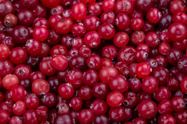 Fresh cranberries. Red background. stock photo