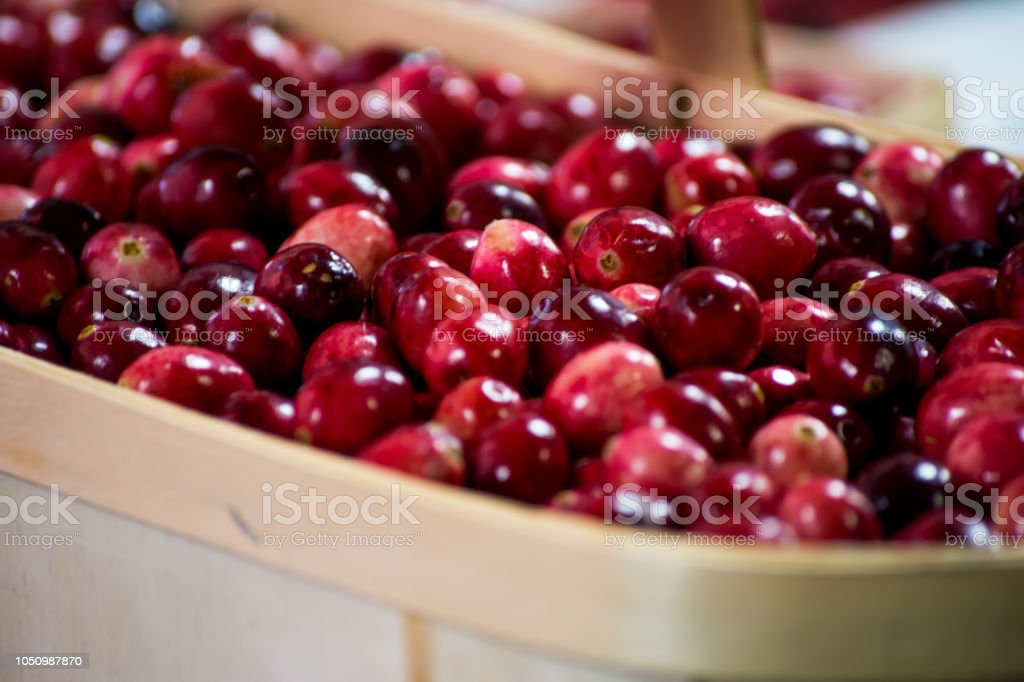 Fresh Cranberry a basket of fresh cranberries close up beautiful food photography background stock photo