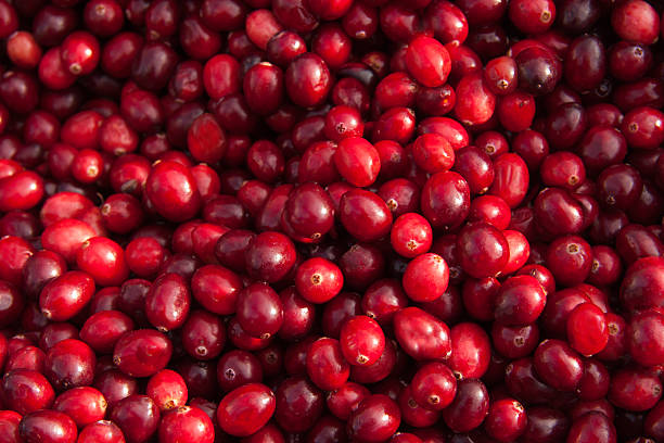 fresh cranberry background - cranberry stock photos and pictures