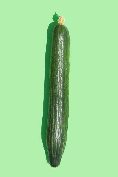 Fresh cucumber stock photo