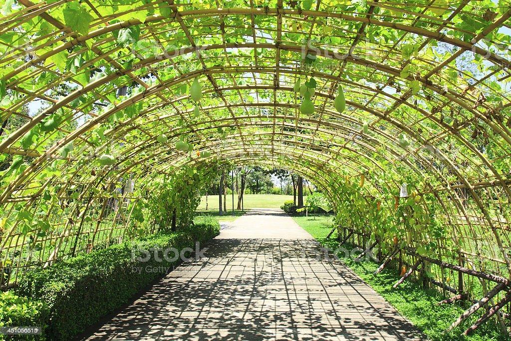 fresh cucurbit tunnel garden stock photo