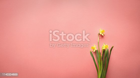 istock Fresh Daffodils over a Coral Colored Background 1140334855