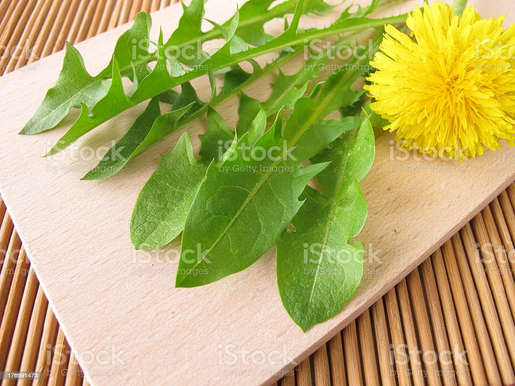 Fresh dandelion greens royalty-free stock photo