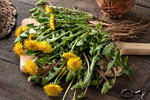 istock Fresh dandelions with roots 1283065393