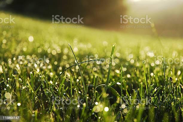 Photo of Fresh dew drops on the ends of some green blades of grass