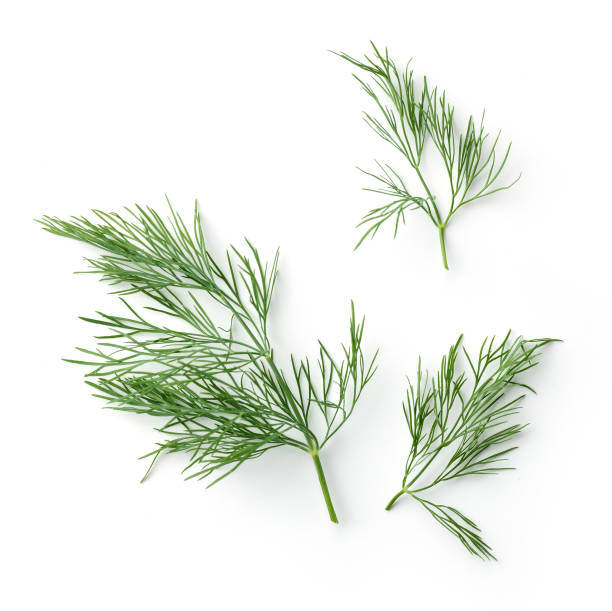 fresh dill leaves fresh dill leaves isolated on white background, top view dill stock pictures, royalty-free photos & images