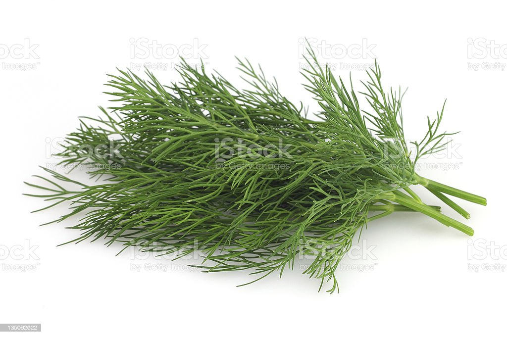 Fresh dill royalty-free stock photo