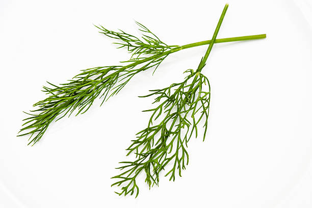 fresh dill close up of frech dill on a white plate dill stock pictures, royalty-free photos & images