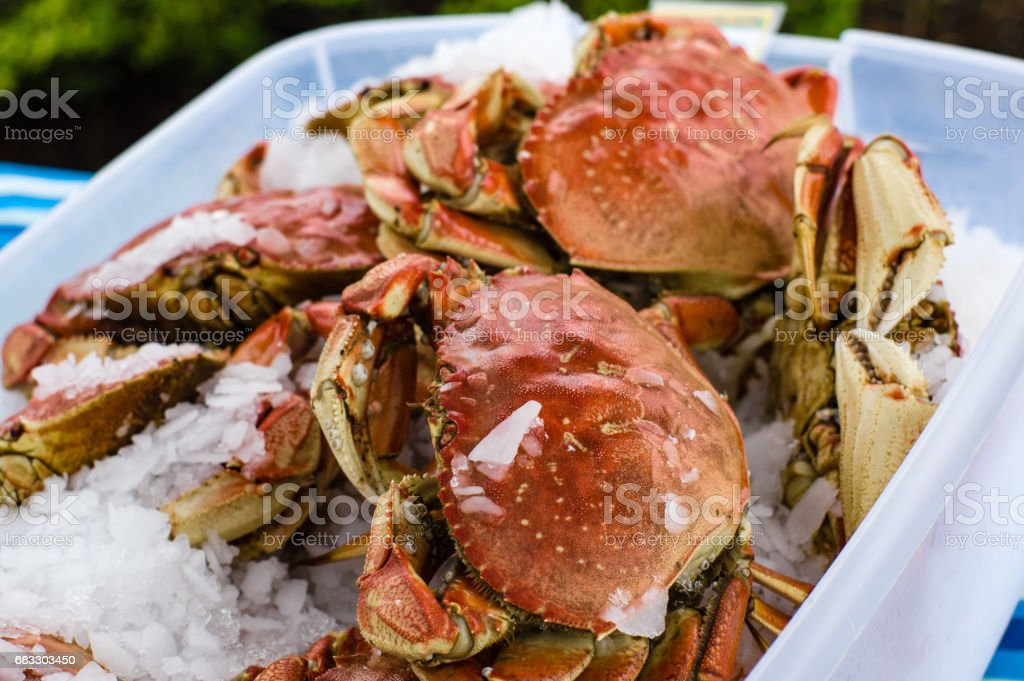 Fresh Dungeness crab at the market royalty free stockfoto