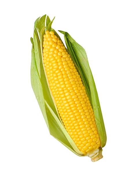 frescos orelha de milho amarelo com um verde palha de milho - milho imagens e fotografias de stock