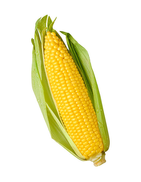 Fresh Ear of Yellow Corn with a Green Husk stock photo