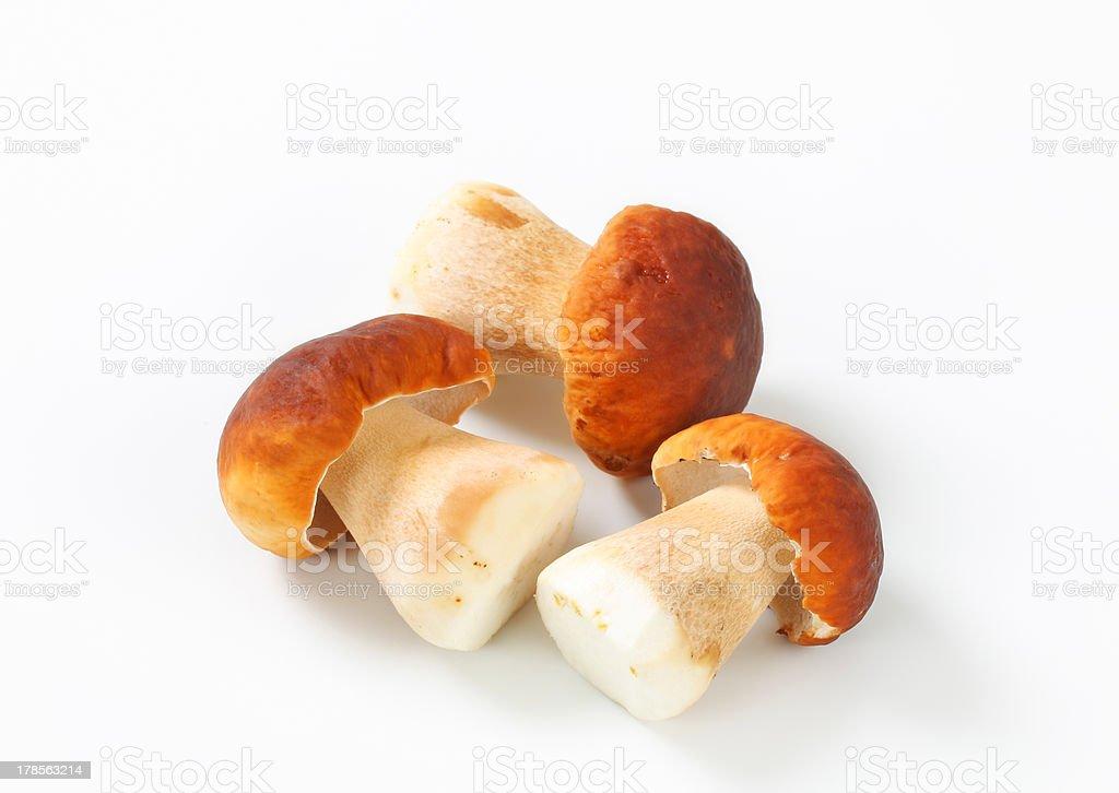 Hongos frescos comestible - foto de stock