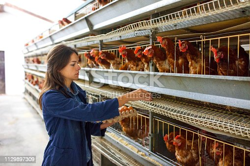 Portrait of young woman farmer holding fresh eggs in hands