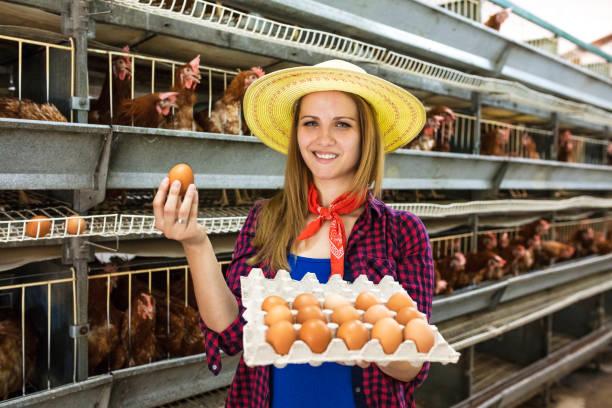 täglich frische eier - eierverpackung stock-fotos und bilder