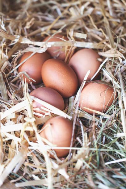 frischen Eiern im Hühnerstall – Foto